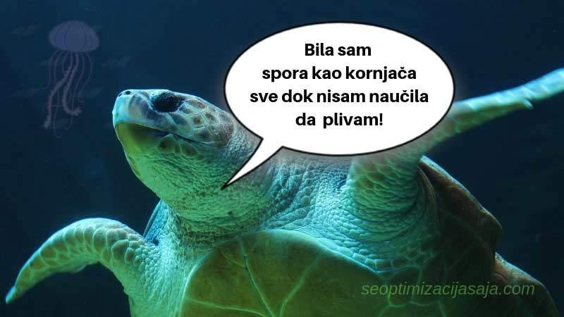 Sporo otvaranje sajta - kornjača